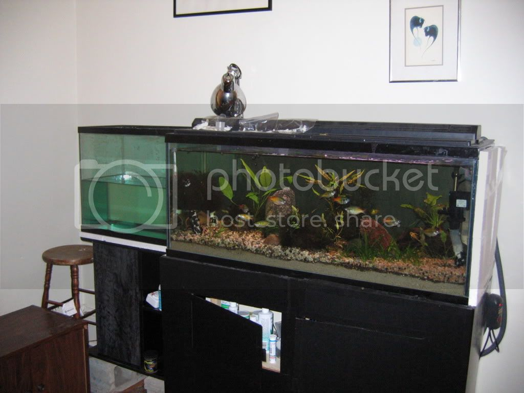 The smaller tank, on the left, is the interface tank.  These are a 55g and 25g tank.
